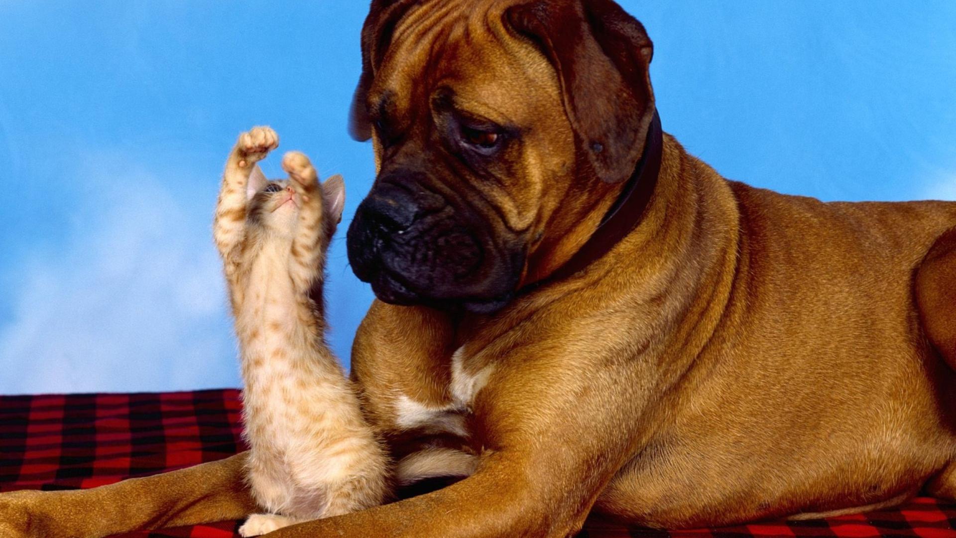 ошибки картинки на рабочий собака боксер сайта гарантируем полную