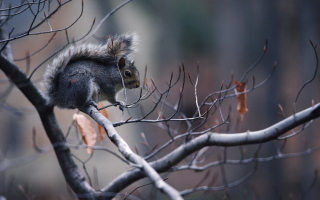 Squirrel On Branch Wallpaper for Android, iPhone and iPad