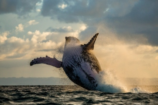 Whale Watching Background for Android, iPhone and iPad