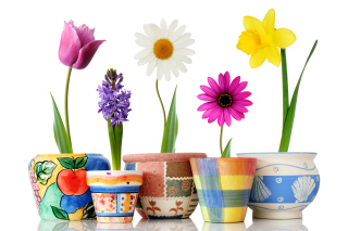 Bright flowers in pots Background for Android, iPhone and iPad