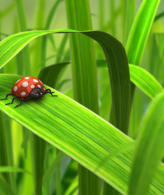 Red Ladybug On Green Grass papel de parede para celular para iPhone 6