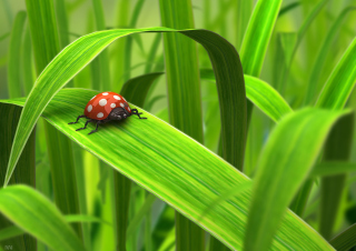 Red Ladybug On Green Grass papel de parede para celular