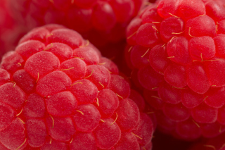 Raspberry Macro Wallpaper for Android, iPhone and iPad
