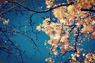 Fall Leaves - Fondos de pantalla gratis