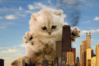 Free Dangerous Cat Picture for Android, iPhone and iPad