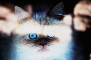 Hypnotizing Cat Eyes Background for Android, iPhone and iPad