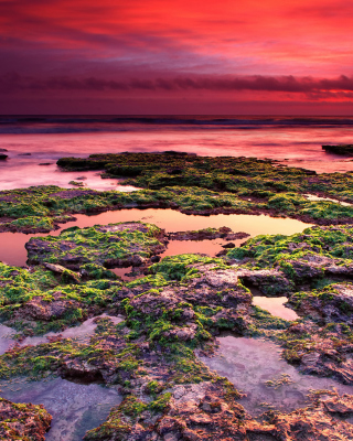 Sunrise on coast - Fondos de pantalla gratis para 640x960