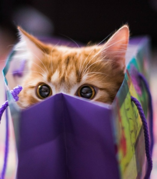 Funny Kitten In Bag sfondi gratuiti per iPhone 4S