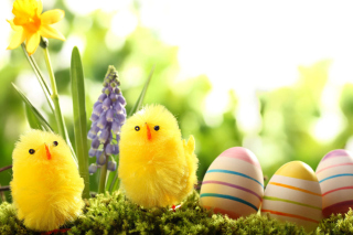 Free Easter Eggs and Hen Picture for Android, iPhone and iPad