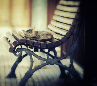 Cat Sleeping On Bench - Fondos de pantalla gratis para 1024x1024