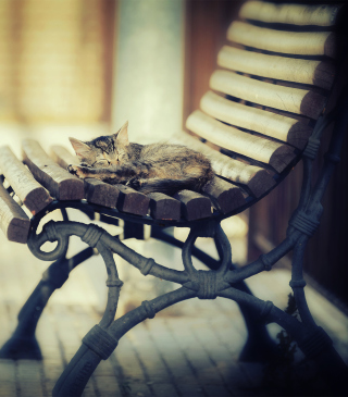 Free Cat Sleeping On Bench Picture for 640x1136