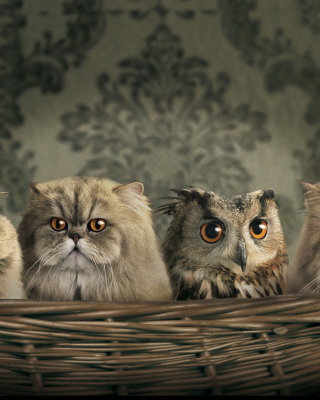 Cats and Owl as Third Wheel sfondi gratuiti per HTC Pure