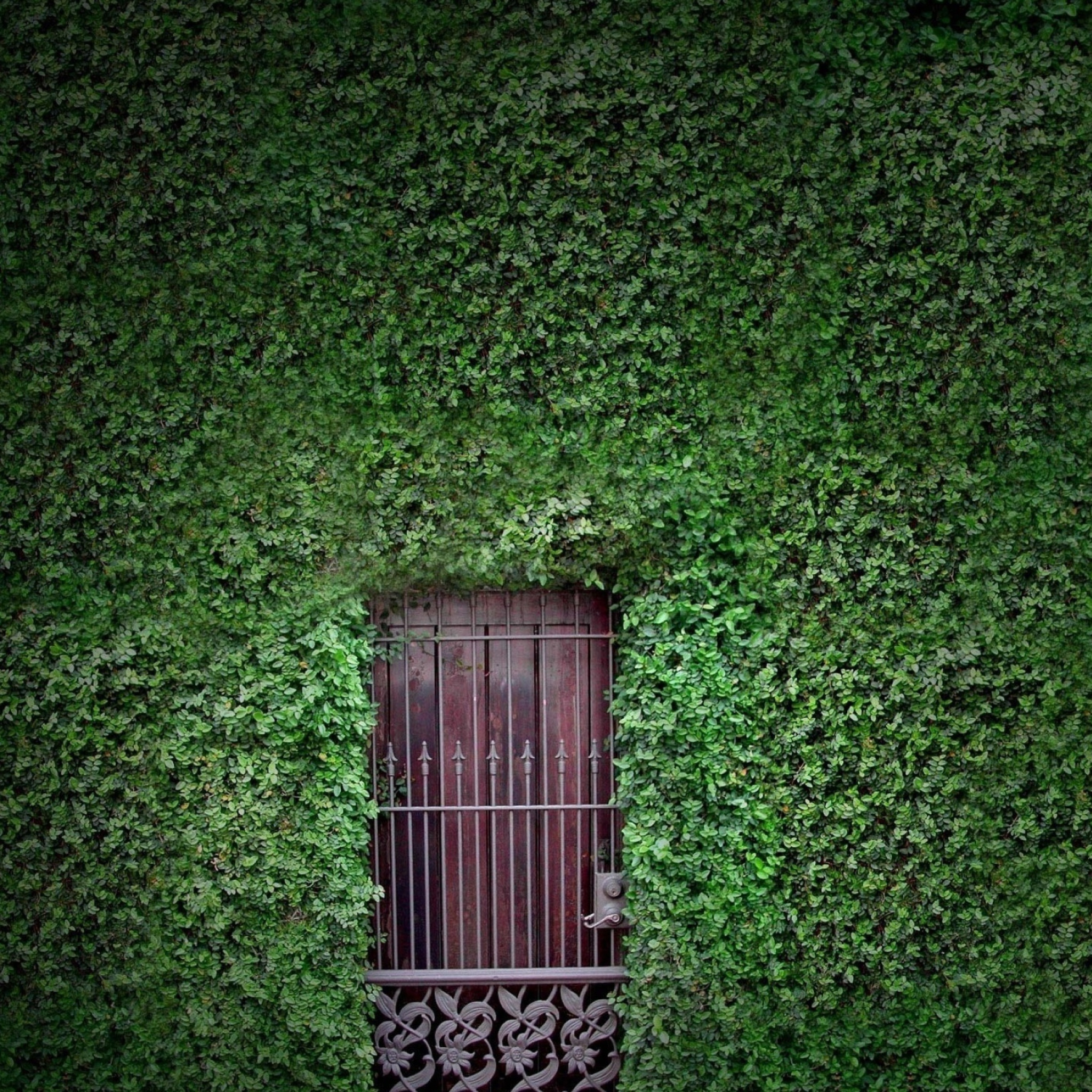 doors windows gates hedges walls consider the Irongate security doors is a family owned energy efficient windows to our product line consider us your one-stop gate security doors has been.