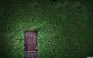 Green Wall And Secret Door Background for Android, iPhone and iPad
