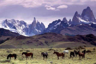 Mountains Scenery & Horses Picture for Android, iPhone and iPad