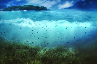 Aquatic Life Background for Android, iPhone and iPad