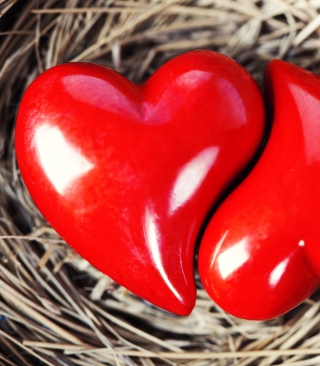 Heart In Nest Wallpaper for Nokia X3-02