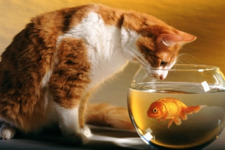 Cat And Fish Picture for Android, iPhone and iPad