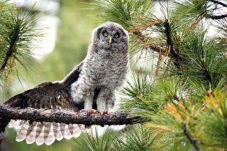 Owl in Forest Background for Android, iPhone and iPad