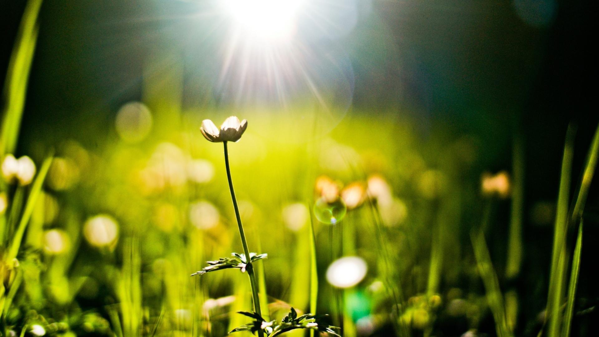 Зеленые растения в лучах солнца анонимно