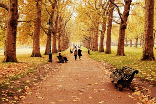Walk In Autumn Park Background for Android, iPhone and iPad