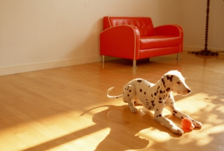 Dalmatian Puppy Picture for 1280x1024