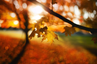 Free Autumn Bokeh Picture for Android, iPhone and iPad