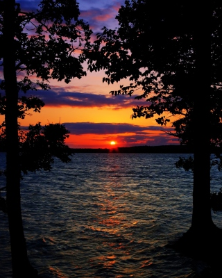 Sunset Between Trees - Fondos de pantalla gratis para 640x960