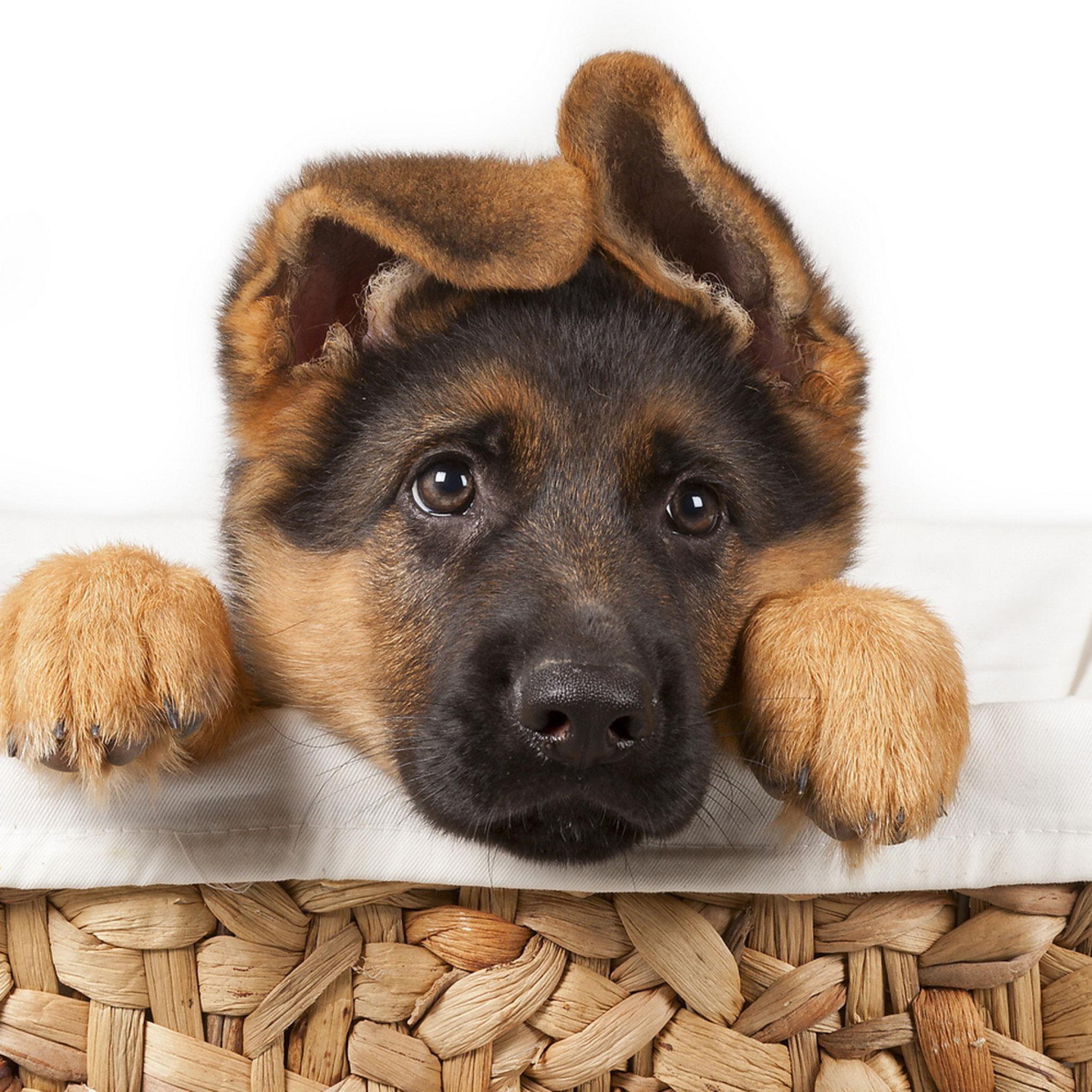 Картинки с поздравлениями для собак