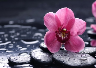 Pink Flower And Stones Picture for Android, iPhone and iPad