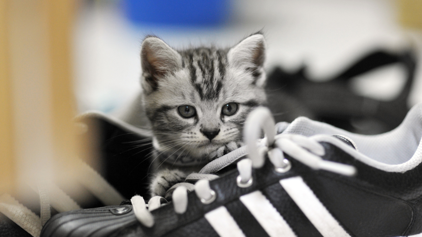 Screenshot №1 pro téma Kitten with shoes 1366x768