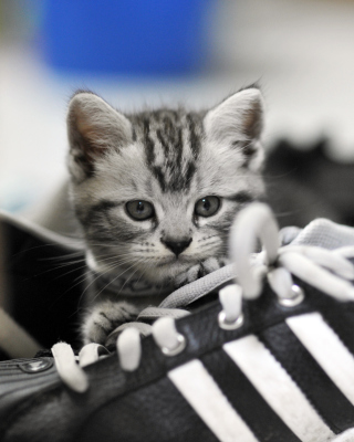Kitten with shoes Background for Nokia C1-01
