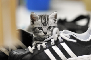 Kitten with shoes Wallpaper for Android, iPhone and iPad