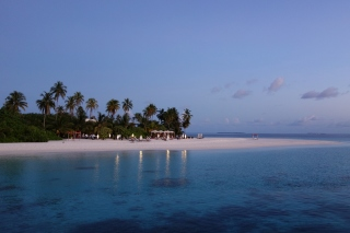 Free Tropic Tree Hotel Maldives Picture for HTC EVO 4G
