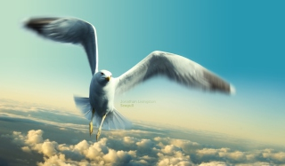 Jonathan Livingston Seagull Wallpaper for Android, iPhone and iPad