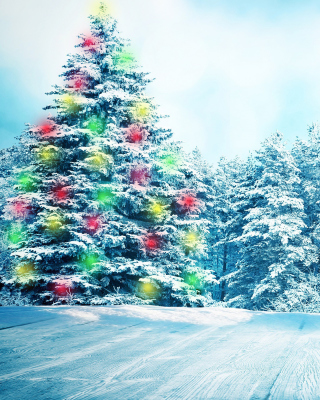 Bright Christmas Tree in Forest Wallpaper for Nokia C1-01