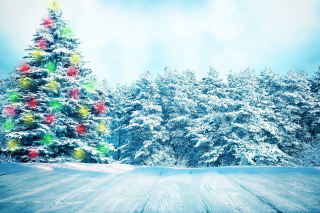 Bright Christmas Tree in Forest Wallpaper for Android, iPhone and iPad