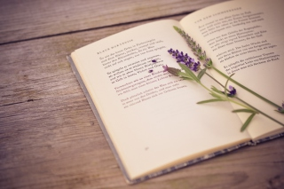 Poetry And Lavender sfondi gratuiti per cellulari Android, iPhone, iPad e desktop