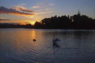 Swan Lake At Sunset Background for Android, iPhone and iPad