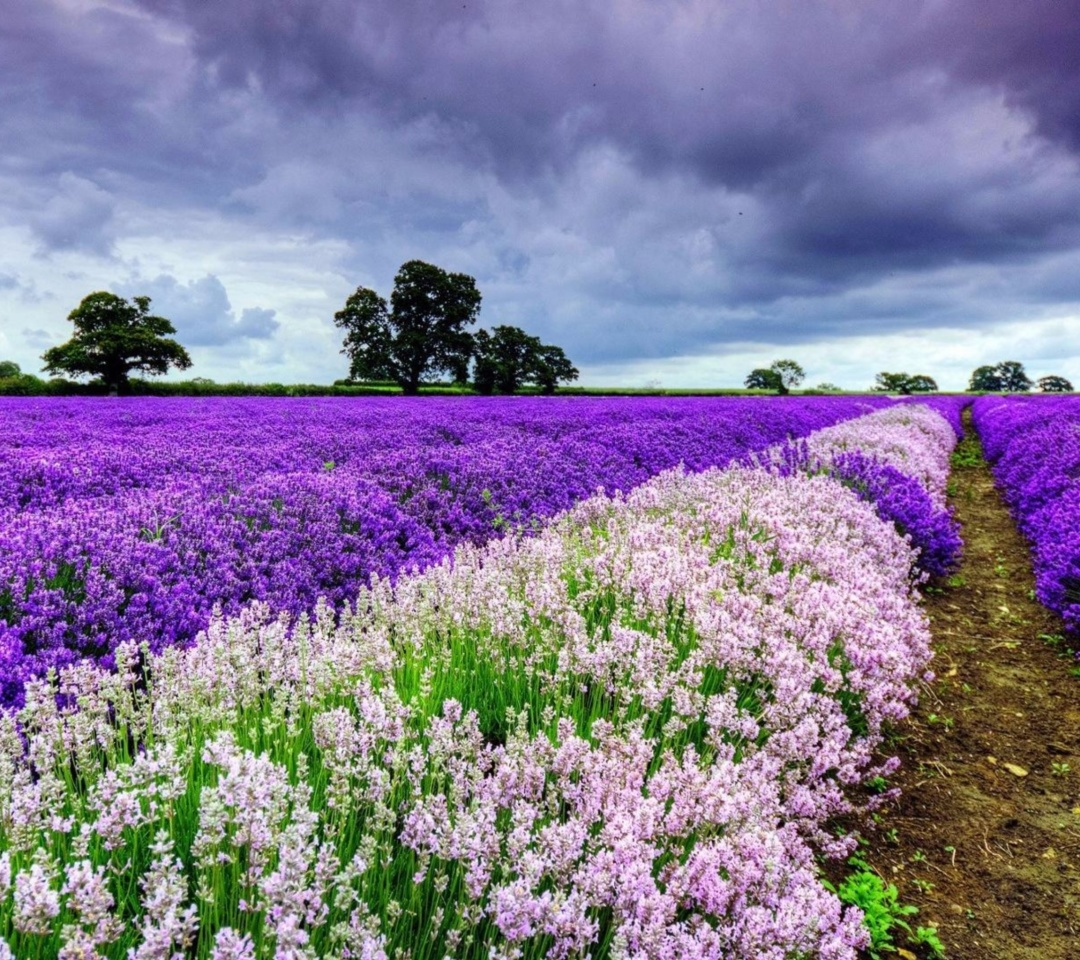 Das Lavender Spring in Provence Wallpaper 1080x960