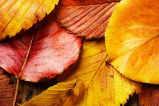 Beautiful Autumn Leaves sfondi gratuiti per cellulari Android, iPhone, iPad e desktop