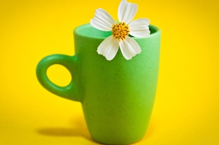 Flower Cup Wallpaper for Android, iPhone and iPad