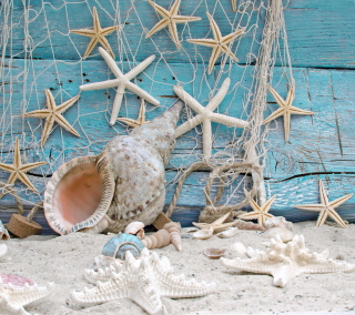 Seashells Background for 1024x1024