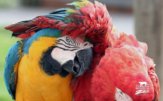 Colorful Macaw Background for Android, iPhone and iPad