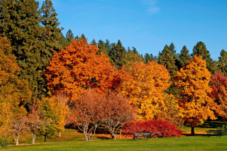 Autumn trees in reserve Background for Android, iPhone and iPad