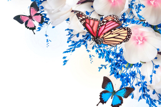 Spring  blossom and butterflies Wallpaper for Android, iPhone and iPad
