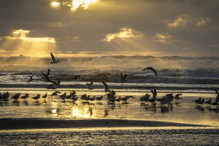 Seagulls And Ocean Waves Wallpaper for Android, iPhone and iPad