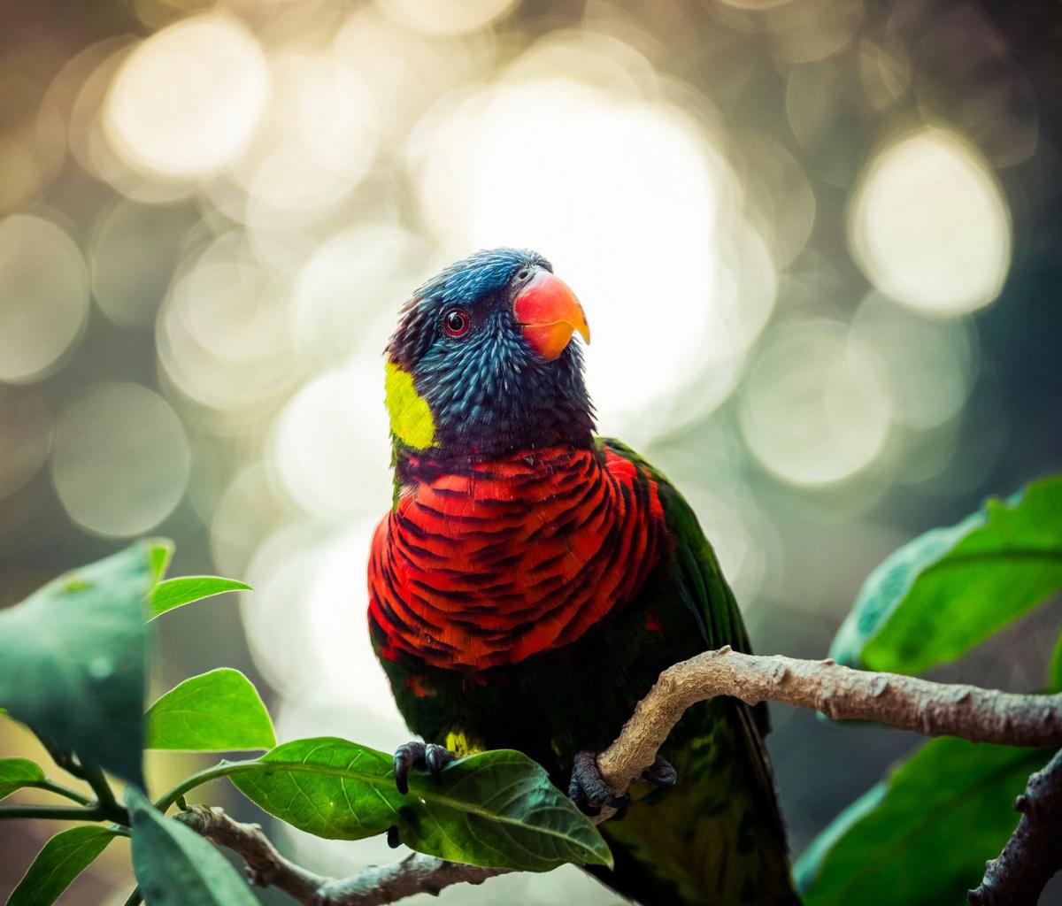 картинки экзотических птиц на рабочий стол этой статье