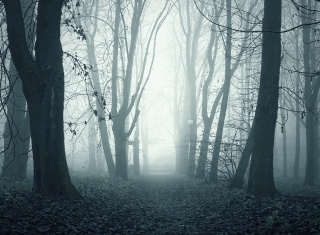 Kostenloses Foggy Shaded Wood Wallpaper für Android, iPhone und iPad