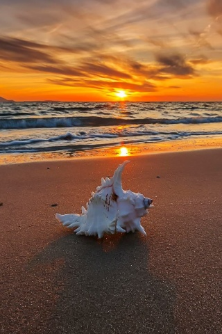 Fondo de pantalla Sunset on Beach with Shell 320x480